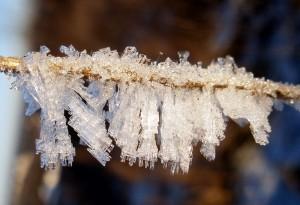 How To Make Salt Crystals Science Project Ideas