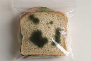 Bread Mold Experiment