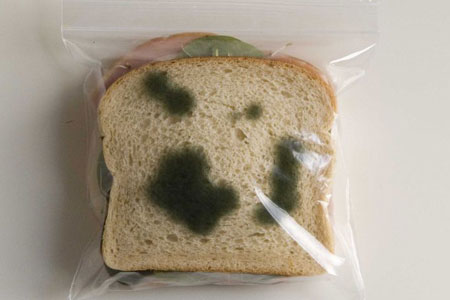 mold science project Science project of the week to mold or not to mold problem:  what conditions make bread mold grow the fastest research: look up mold.